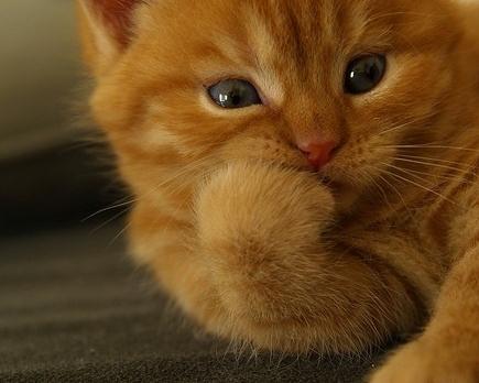 kitty pensativo