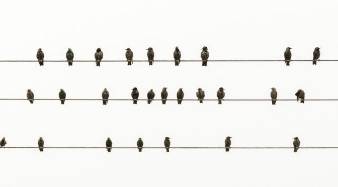 [Resenha] Os Pássaros | Frank Baker